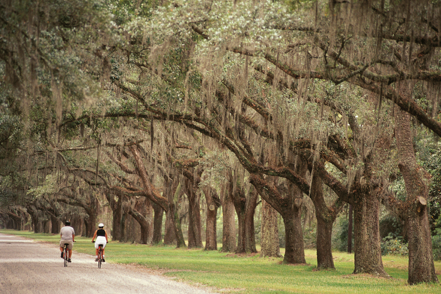 Charleston biking tour