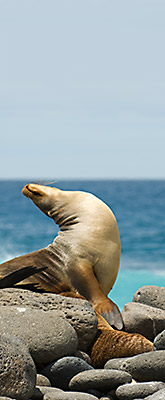 Galapagos adventure vacation